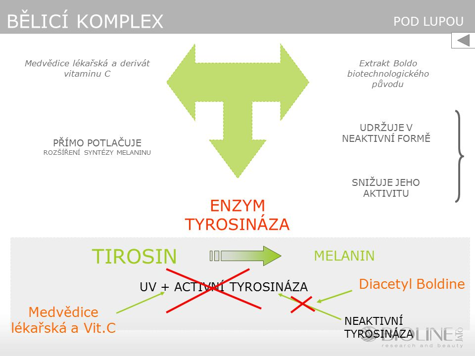 TIROSIN BĚLICÍ KOMPLEX ENZYM TYROSINÁZA MELANIN Diacetyl Boldine