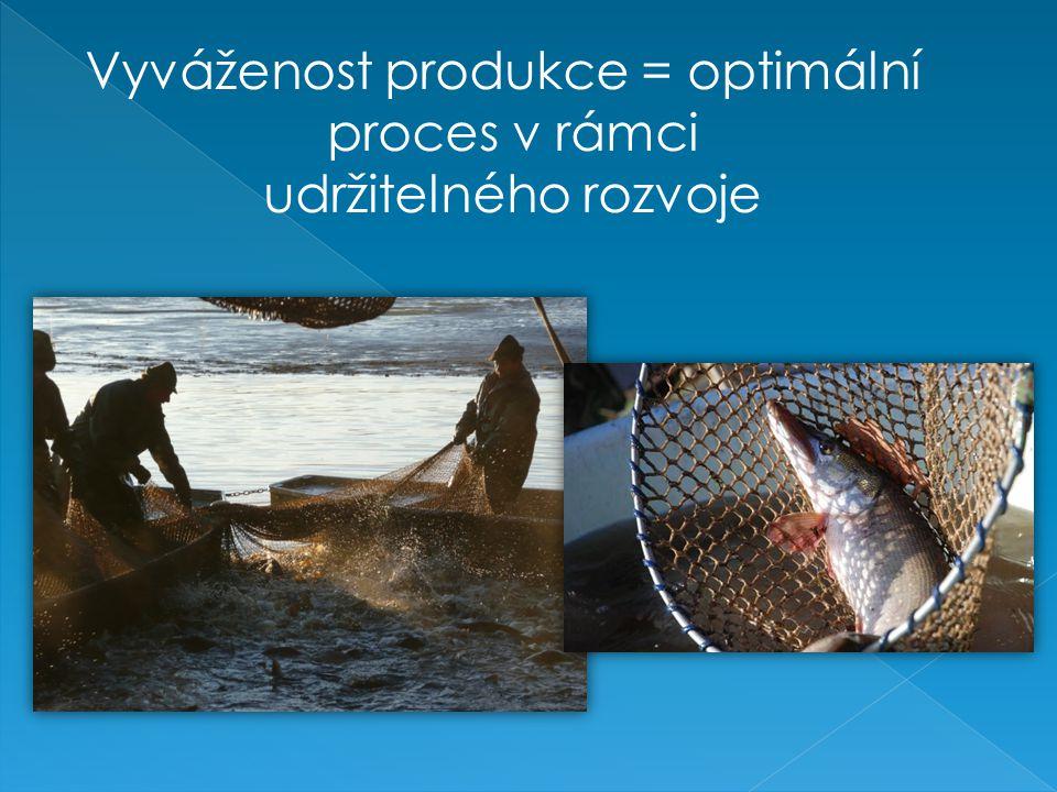Vyváženost produkce = optimální
