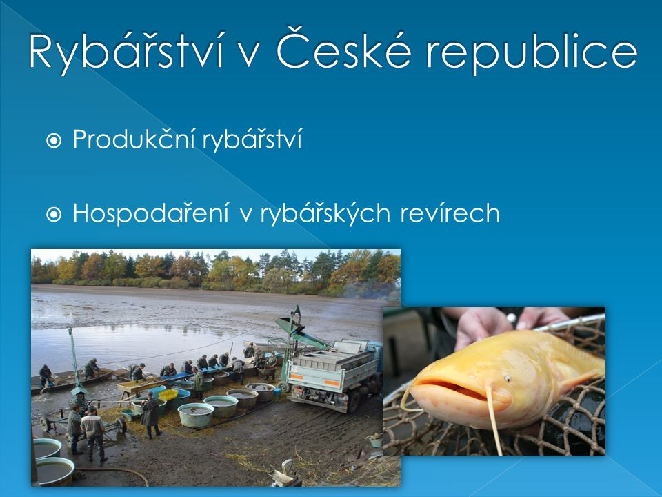 Rybářství v České republice