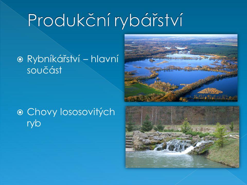 Produkční rybářství Rybníkářství – hlavní součást