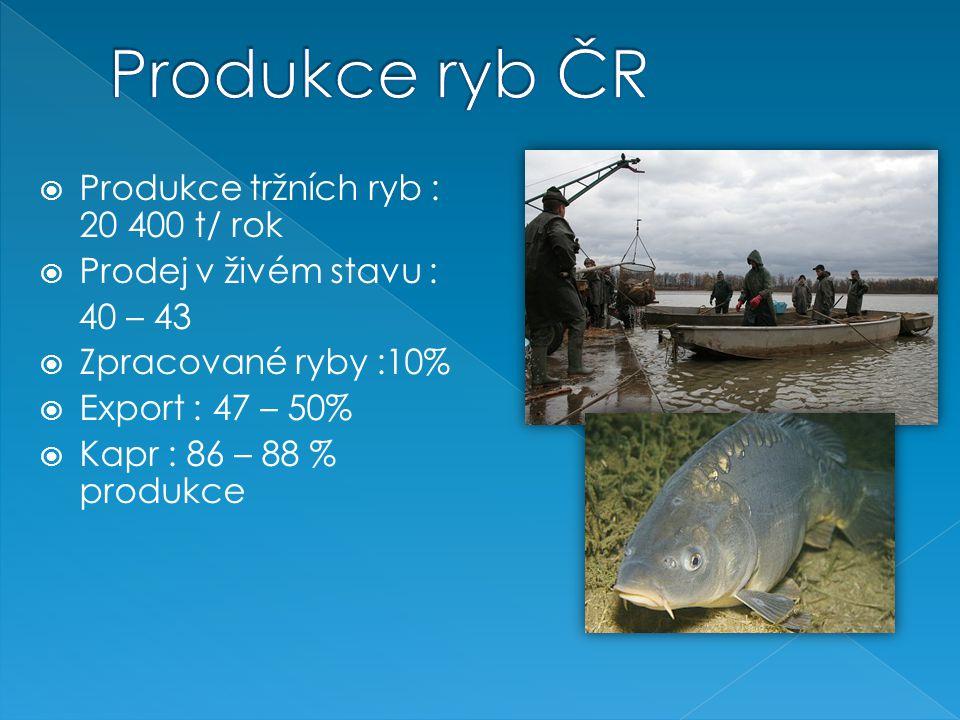 Produkce ryb ČR Produkce tržních ryb : 20 400 t/ rok