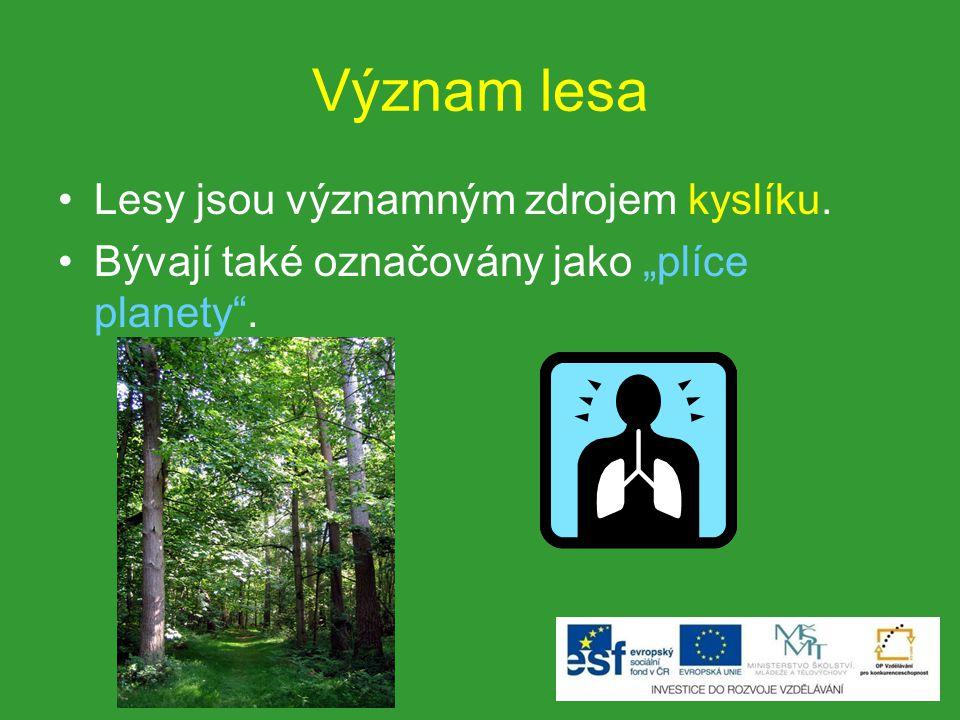 Význam lesa Lesy jsou významným zdrojem kyslíku.
