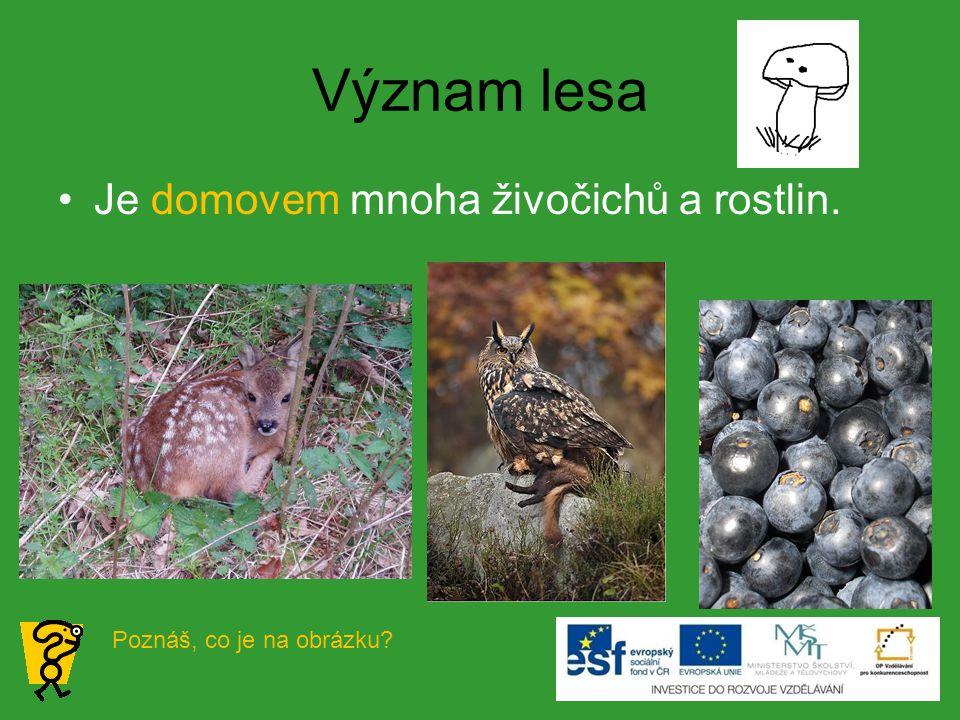 Význam lesa Je domovem mnoha živočichů a rostlin.