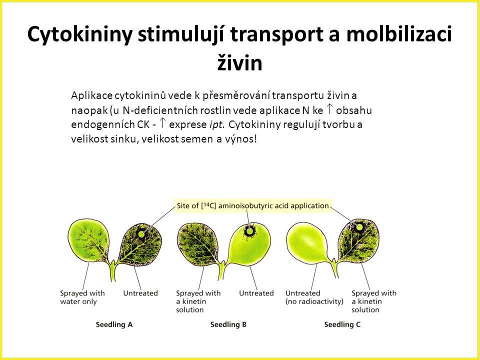 Cytokininy stimulují transport a molbilizaci živin