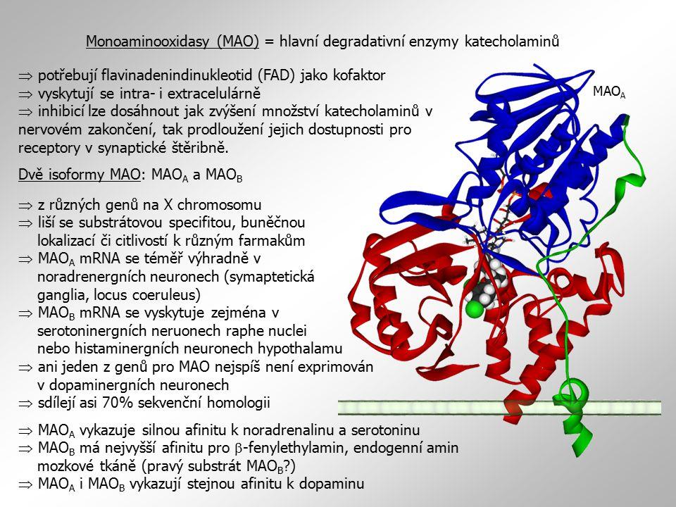 Monoaminooxidasy (MAO) = hlavní degradativní enzymy katecholaminů