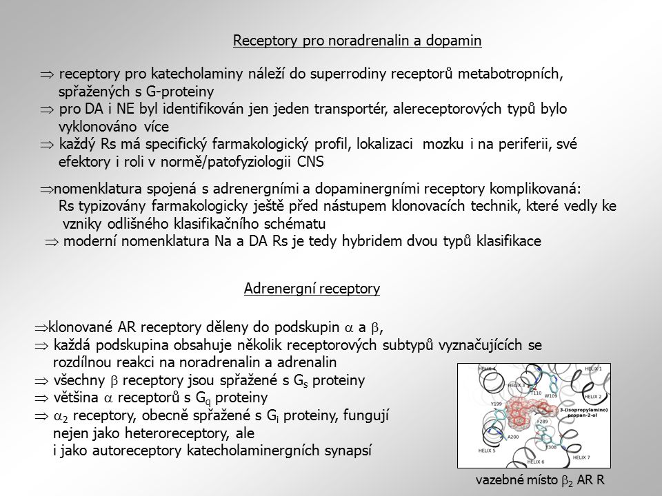 Receptory pro noradrenalin a dopamin