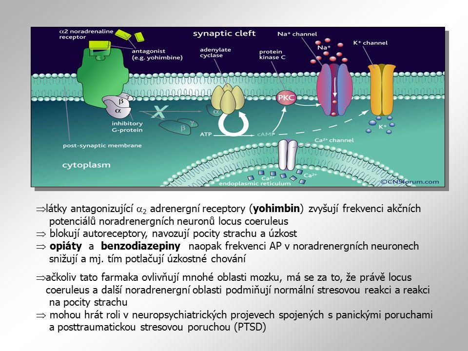 látky antagonizující a2 adrenergní receptory (yohimbin) zvyšují frekvenci akčních potenciálů noradrenergních neuronů locus coeruleus  blokují autoreceptory, navozují pocity strachu a úzkost  opiáty a benzodiazepiny naopak frekvenci AP v noradrenergních neuronech snižují a mj. tím potlačují úzkostné chování