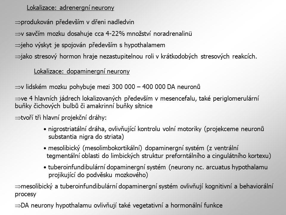 Lokalizace: adrenergní neurony