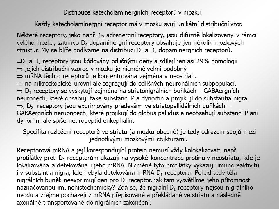Distribuce katecholaminergních receptorů v mozku