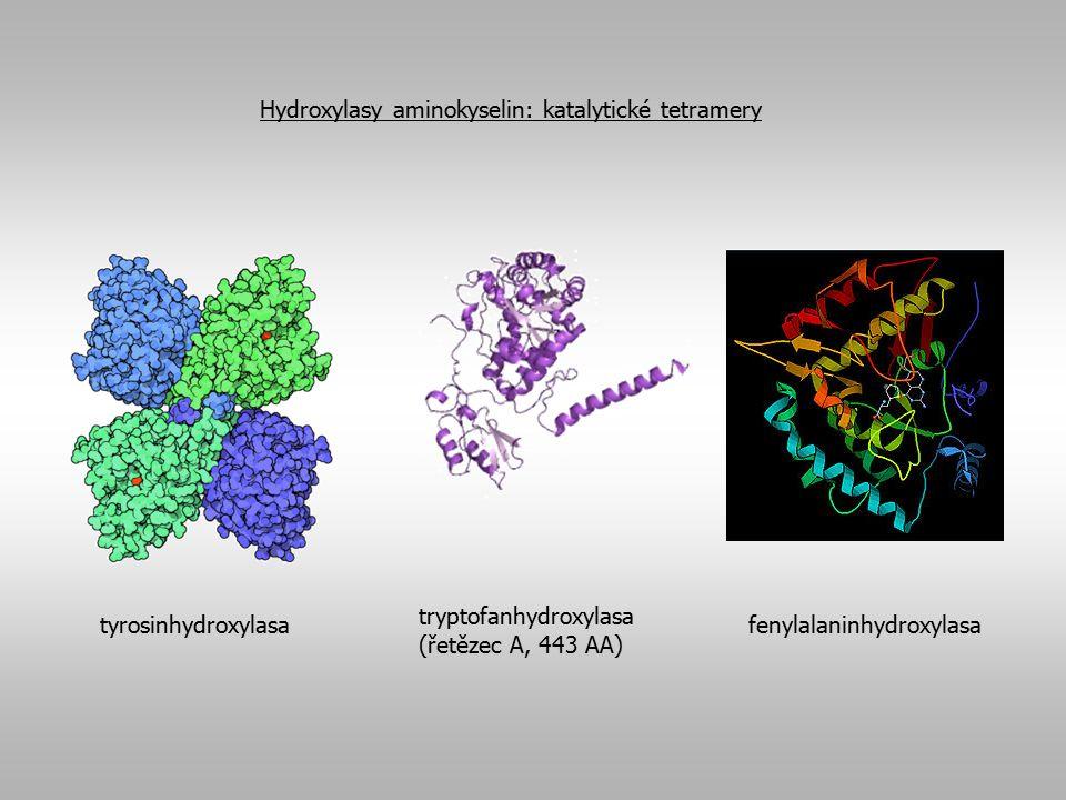 Hydroxylasy aminokyselin: katalytické tetramery
