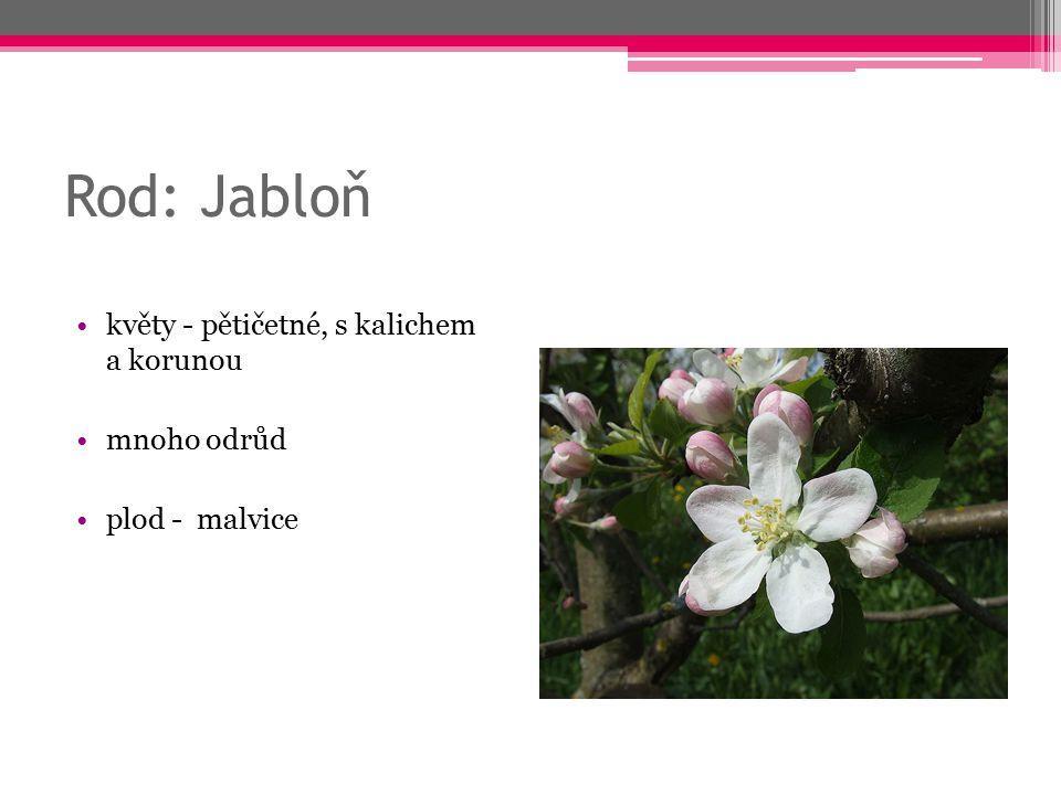 Rod: Jabloň květy - pětičetné, s kalichem a korunou mnoho odrůd