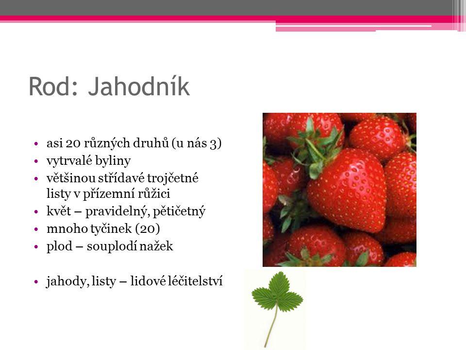 Rod: Jahodník asi 20 různých druhů (u nás 3) vytrvalé byliny