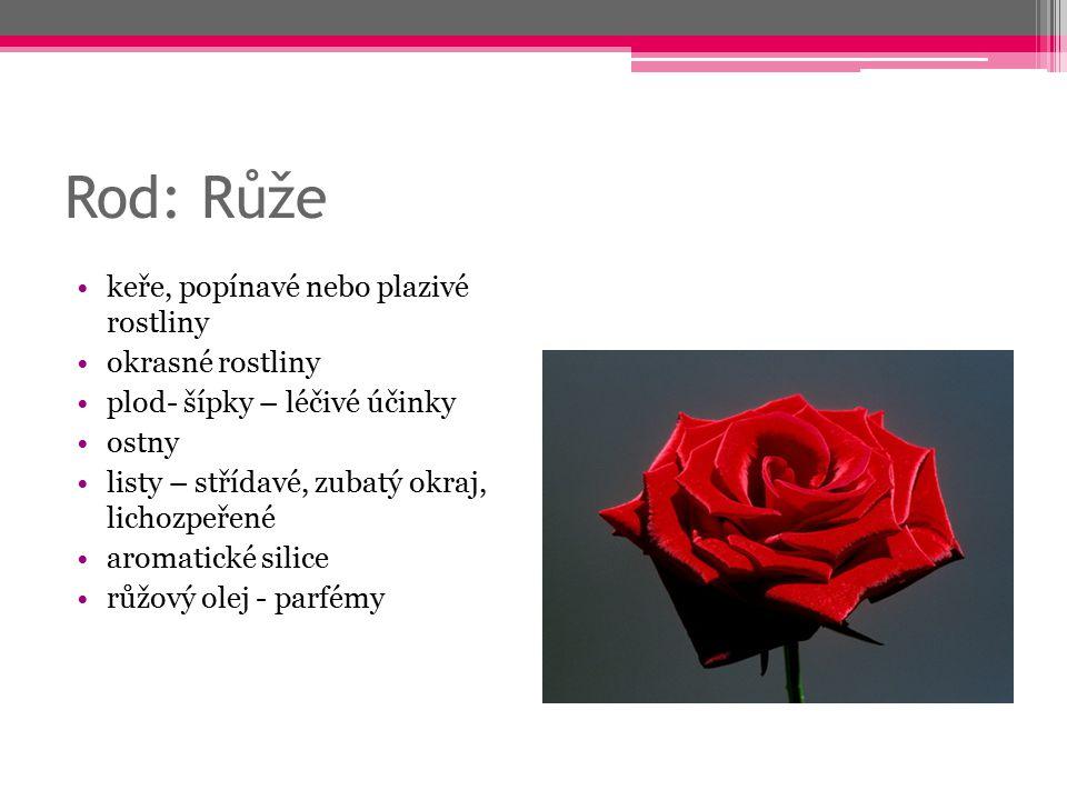 Rod: Růže keře, popínavé nebo plazivé rostliny okrasné rostliny
