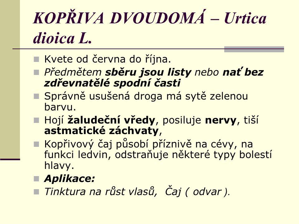 KOPŘIVA DVOUDOMÁ – Urtica dioica L.