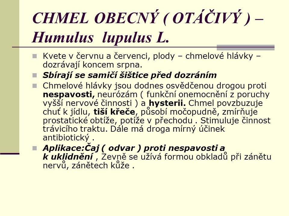 CHMEL OBECNÝ ( OTÁČIVÝ ) – Humulus lupulus L.
