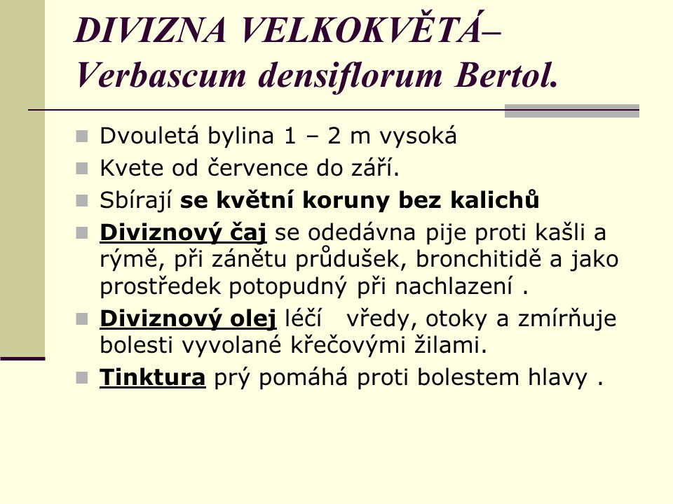 DIVIZNA VELKOKVĚTÁ– Verbascum densiflorum Bertol.