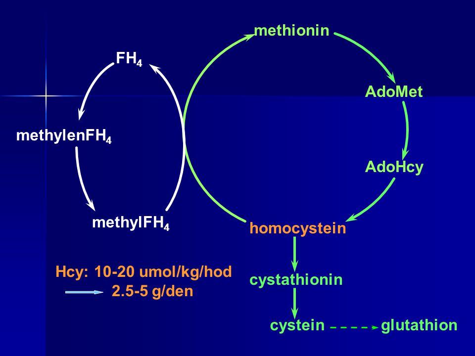 methionin FH4. AdoMet. methylenFH4. AdoHcy. methylFH4. homocystein. Hcy: 10-20 umol/kg/hod. 2.5-5 g/den.