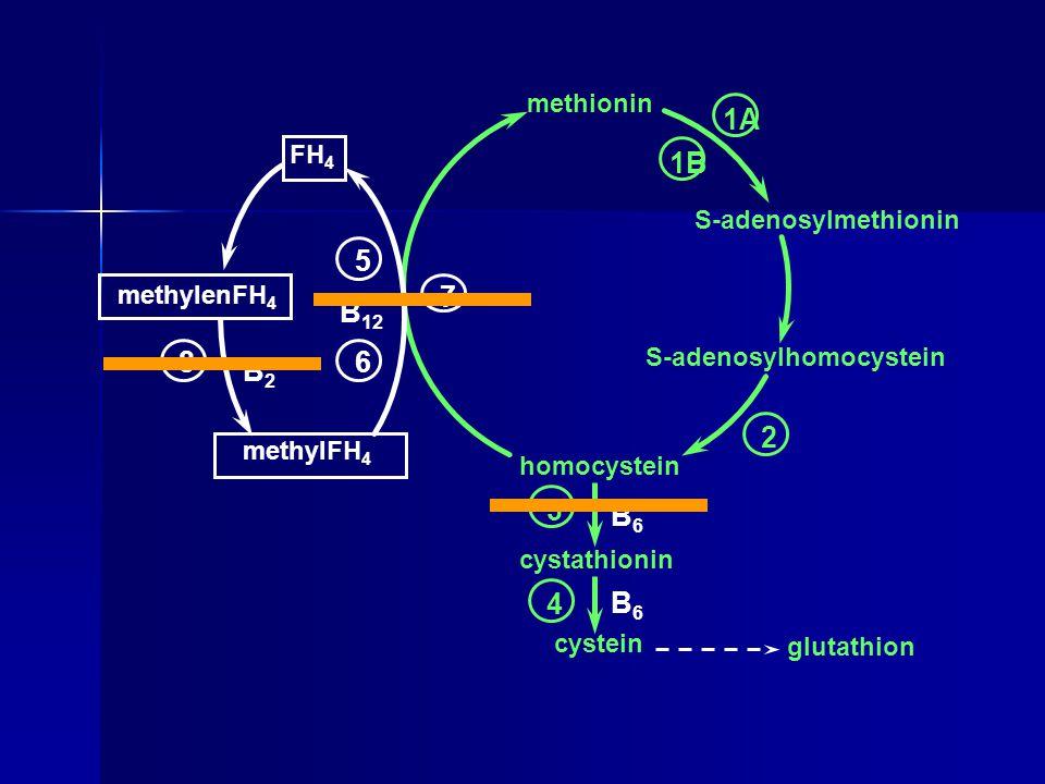 1A 1B 5 7 B12 8 6 B2 2 3 B6 4 B6 methionin FH4 S-adenosylmethionin