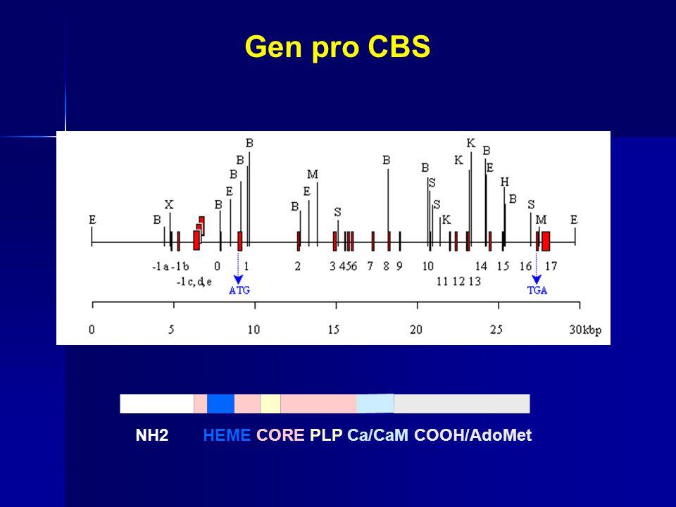 Gen pro CBS NH2 HEME CORE PLP Ca/CaM COOH/AdoMet