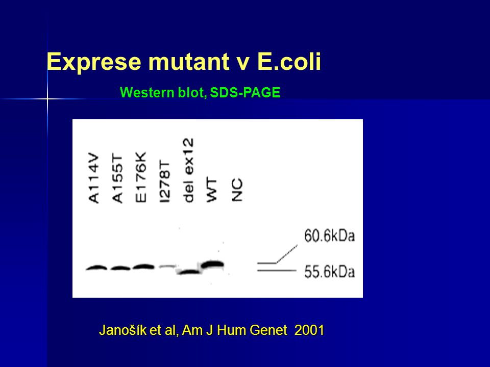 Exprese mutant v E.coli Western blot, SDS-PAGE