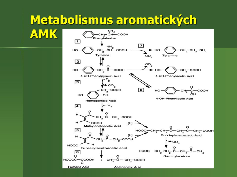 Metabolismus aromatických AMK