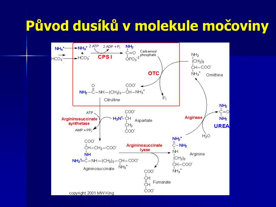 Původ dusíků v molekule močoviny