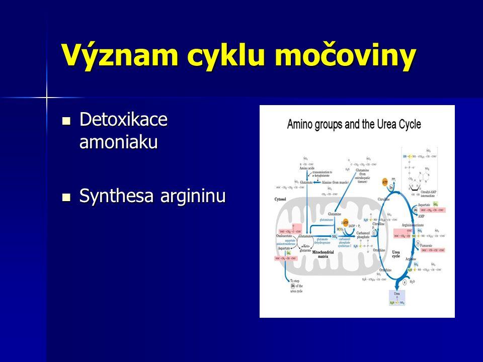 Význam cyklu močoviny Detoxikace amoniaku Synthesa argininu
