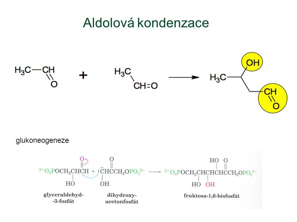 Aldolová kondenzace glukoneogeneze