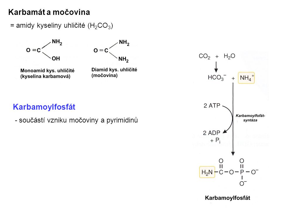 Karbamát a močovina Karbamoylfosfát = amidy kyseliny uhličité (H2CO3)