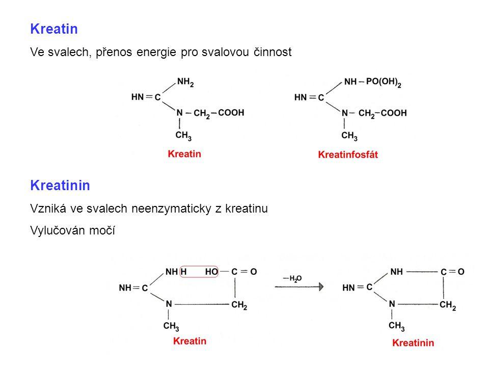 Kreatin Kreatinin Ve svalech, přenos energie pro svalovou činnost