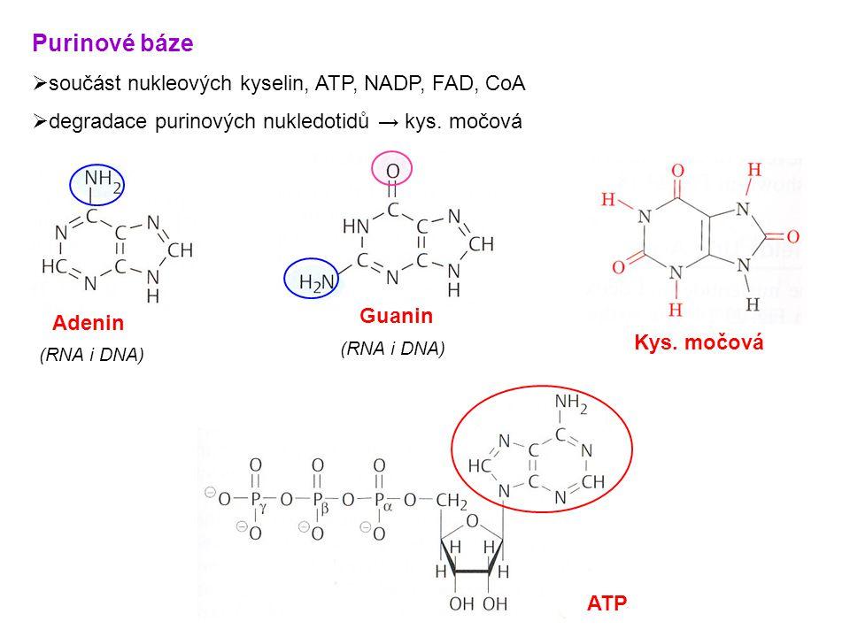 Purinové báze součást nukleových kyselin, ATP, NADP, FAD, CoA