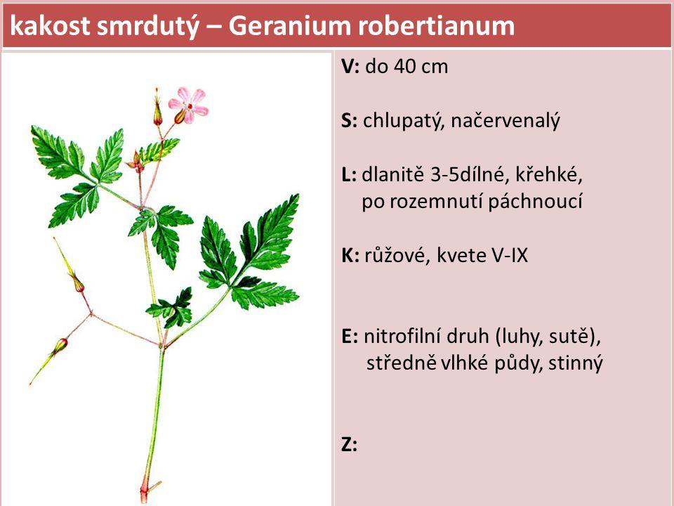 kakost smrdutý – Geranium robertianum