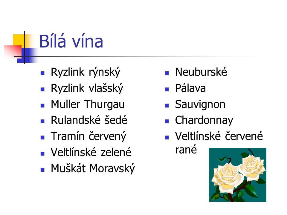 Bílá vína Ryzlink rýnský Ryzlink vlašský Muller Thurgau Rulandské šedé