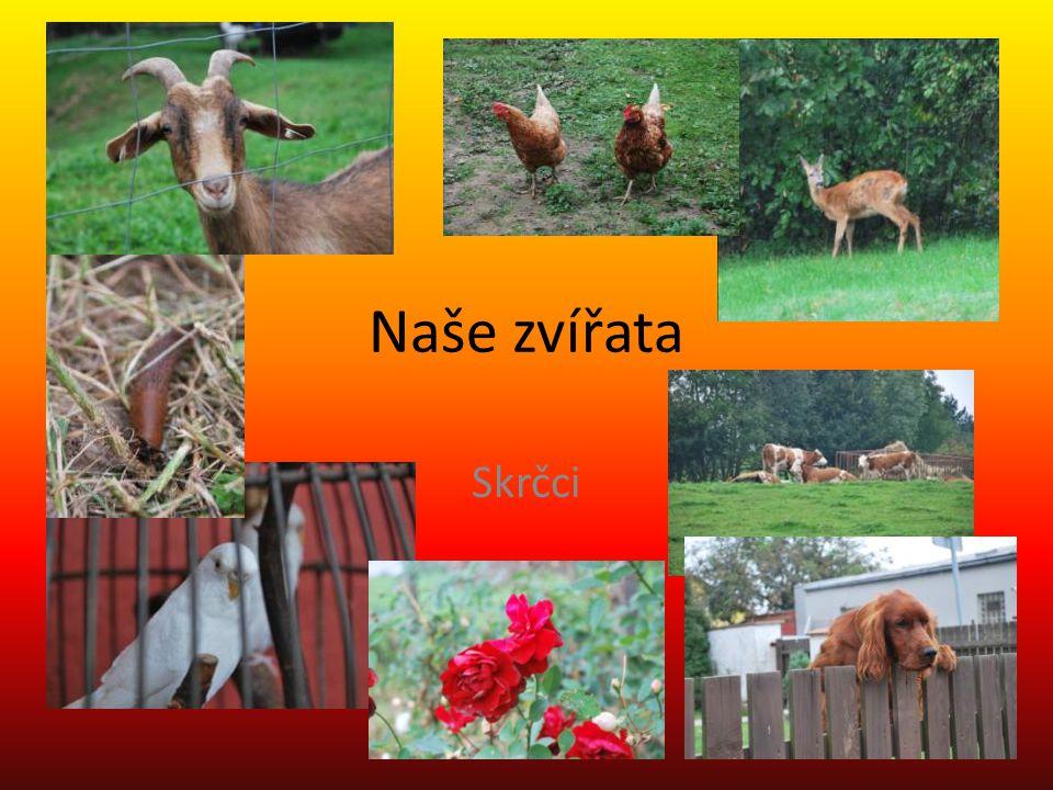 Naše zvířata Skrčci