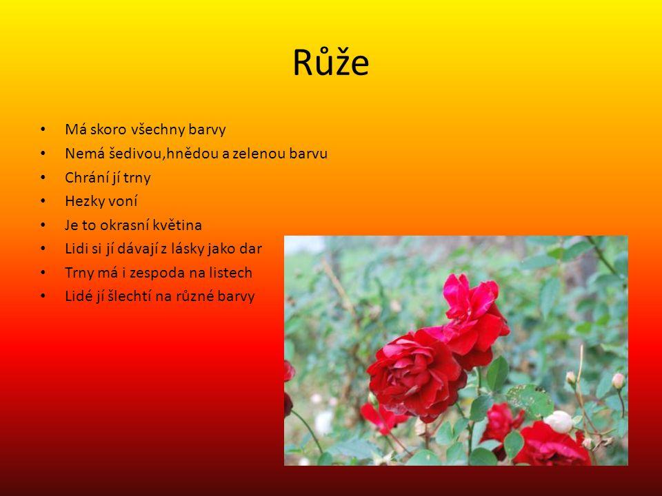 Růže Má skoro všechny barvy Nemá šedivou,hnědou a zelenou barvu