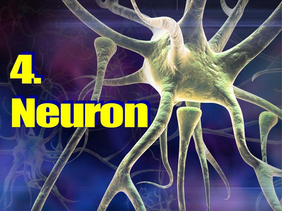 4. Neuron