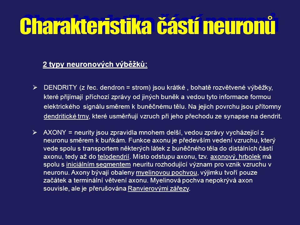 2 typy neuronových výběžků: