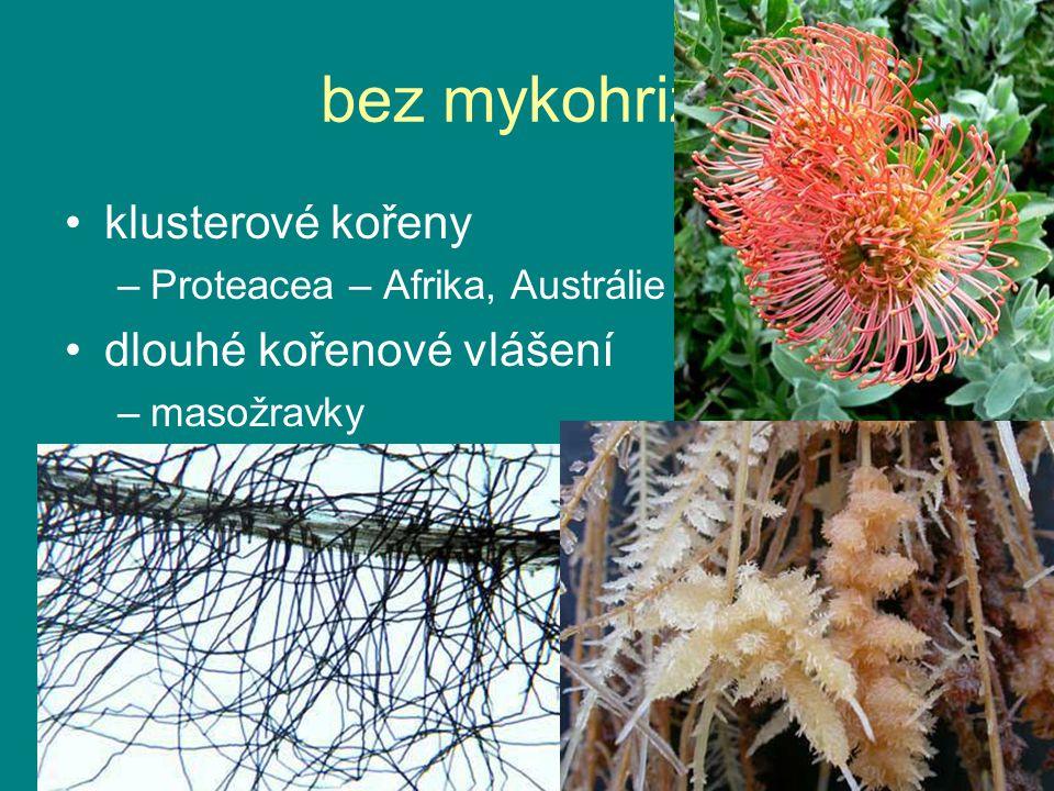 bez mykohrizy klusterové kořeny dlouhé kořenové vlášení