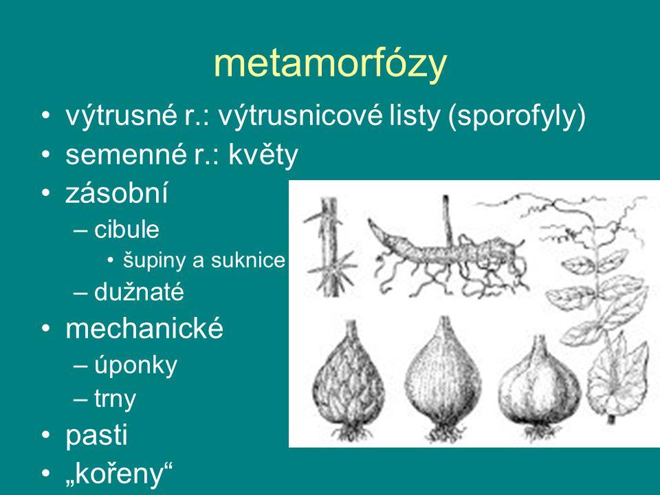metamorfózy výtrusné r.: výtrusnicové listy (sporofyly)