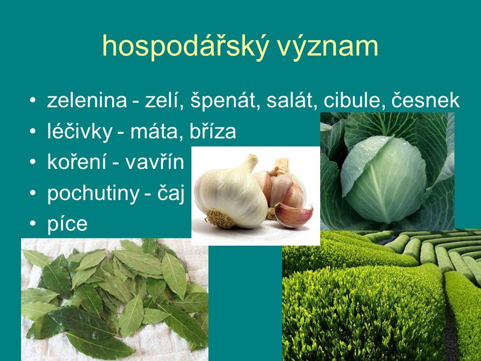 hospodářský význam zelenina - zelí, špenát, salát, cibule, česnek