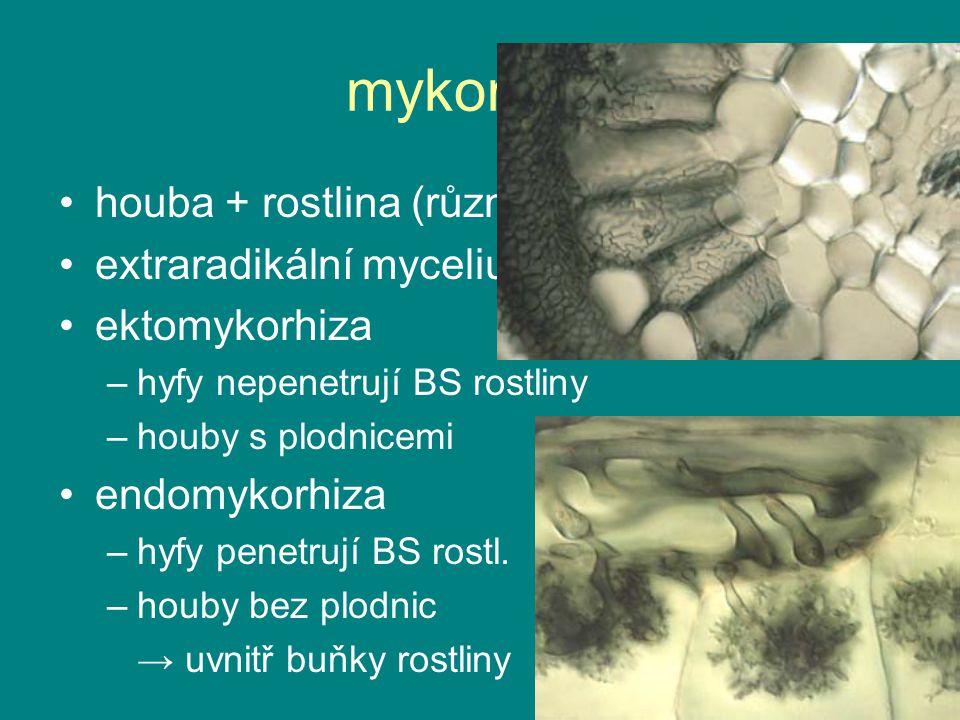 mykorhiza houba + rostlina (různé druhy) extraradikální mycelium