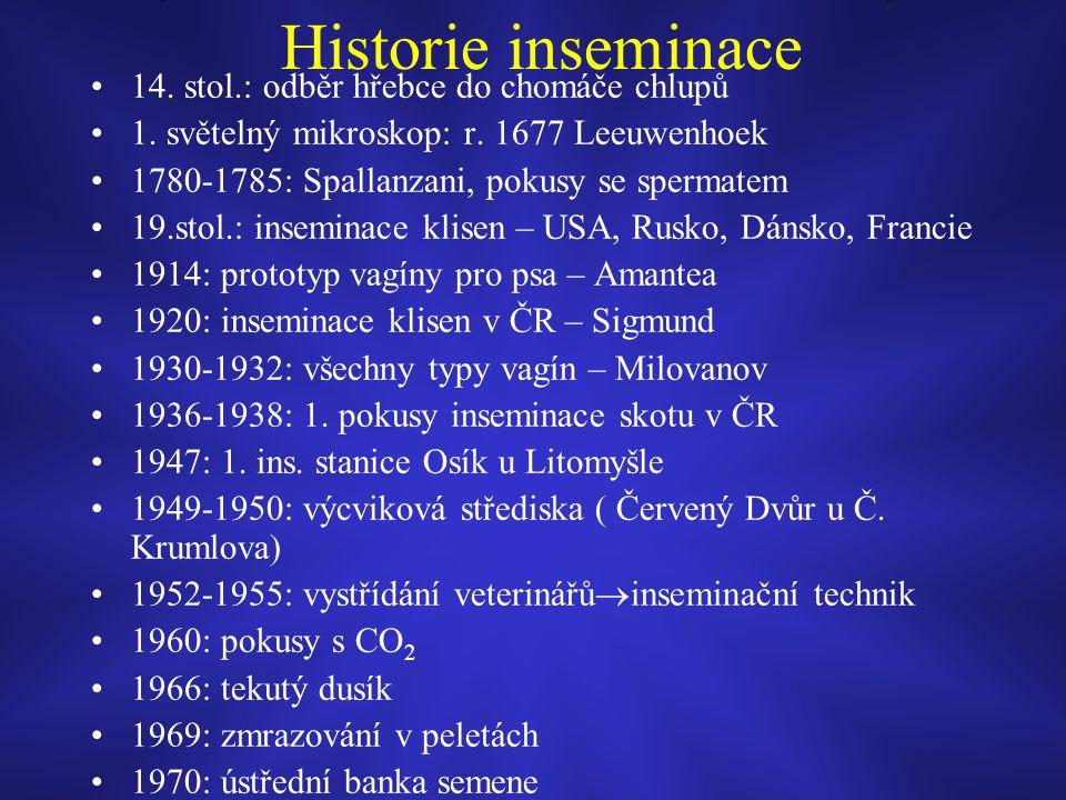 Historie inseminace 14. stol.: odběr hřebce do chomáče chlupů
