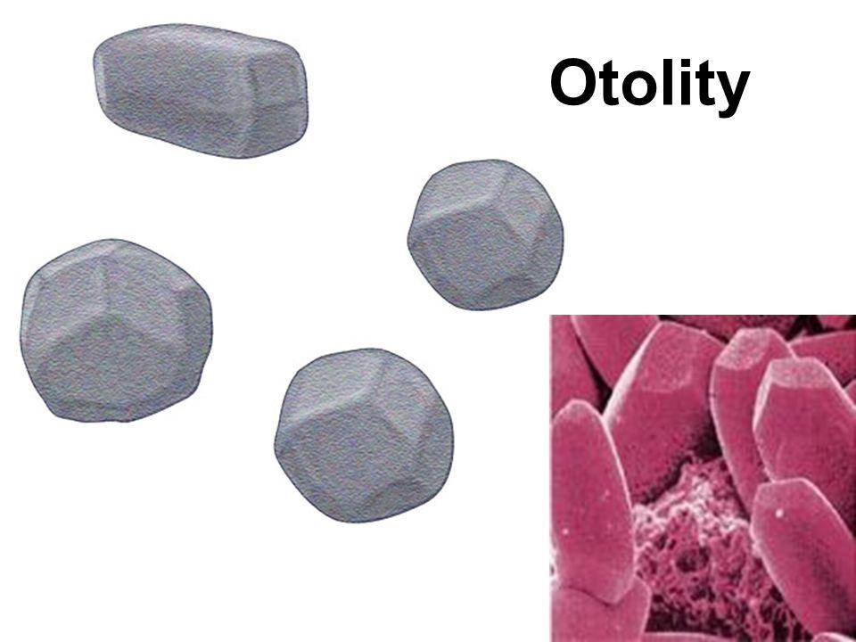 Otolity
