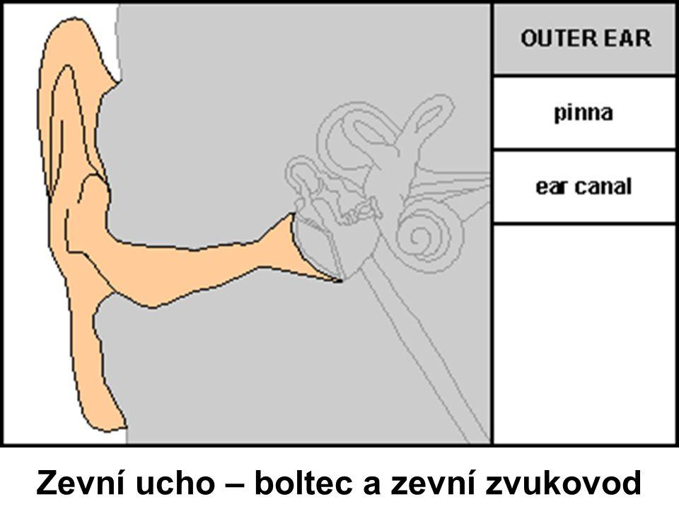 Zevní ucho – boltec a zevní zvukovod