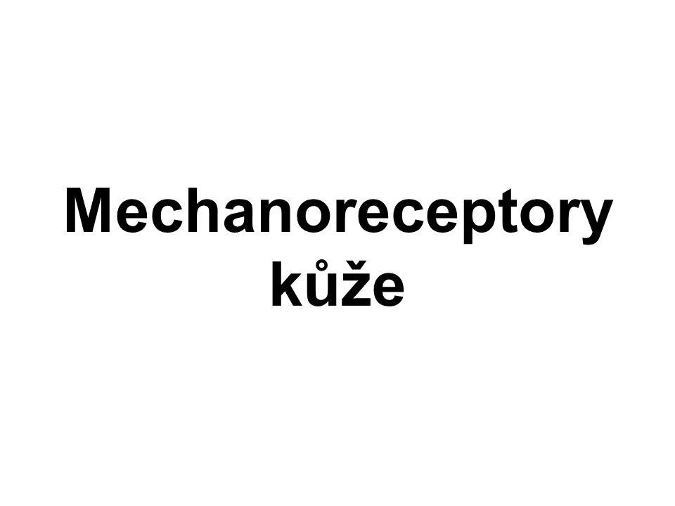 Mechanoreceptory kůže