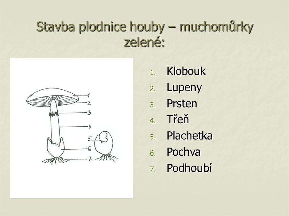 Stavba plodnice houby – muchomůrky zelené: