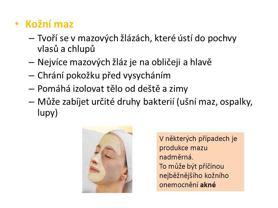 Kožní maz Tvoří se v mazových žlázách, které ústí do pochvy vlasů a chlupů. Nejvíce mazových žláz je na obličeji a hlavě.