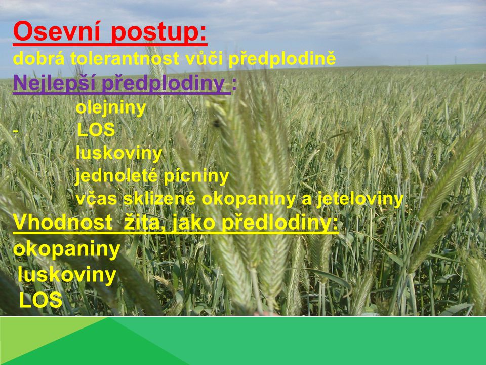 Osevní postup: Nejlepší předplodiny : Vhodnost žita, jako předlodiny: