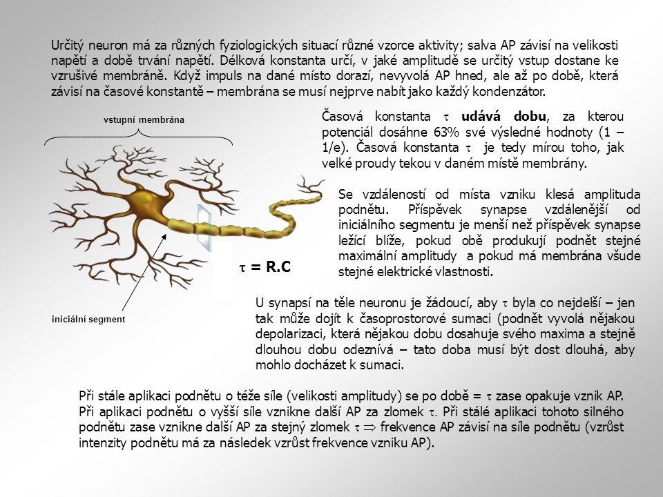 Určitý neuron má za různých fyziologických situací různé vzorce aktivity; salva AP závisí na velikosti napětí a době trvání napětí. Délková konstanta určí, v jaké amplitudě se určitý vstup dostane ke vzrušivé membráně. Když impuls na dané místo dorazí, nevyvolá AP hned, ale až po době, která závisí na časové konstantě – membrána se musí nejprve nabít jako každý kondenzátor.
