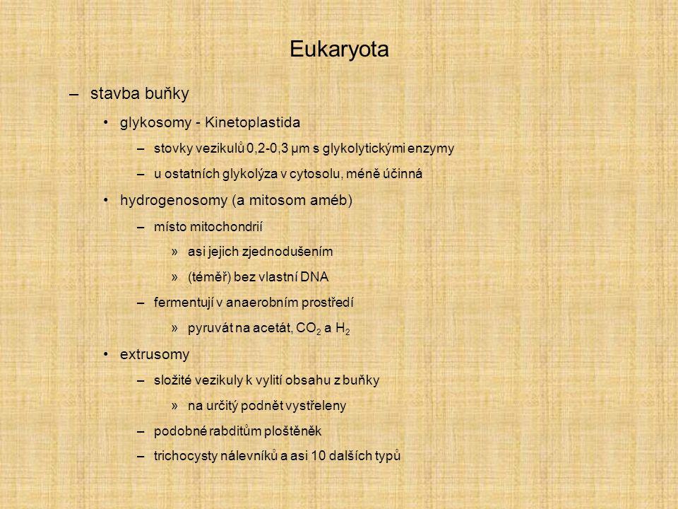 Eukaryota stavba buňky glykosomy - Kinetoplastida